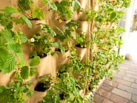 Необычное озеленение стен въезда во двор