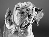 Забавные фотографии отряхивающихся собак