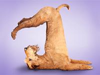 Йога для собак
