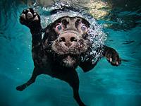 Подводные собачьи фото