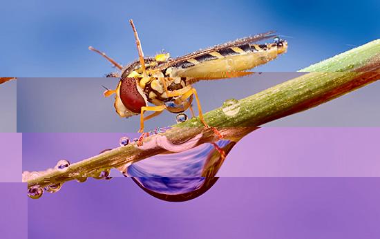 Мокрые насекомые фотографа Ондрея Пакана